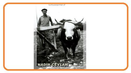 Nadir CEYLAN